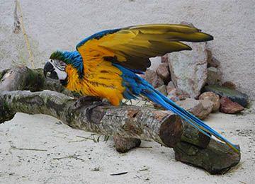 Un ara bleu sur un morceau de bois au zoo Le PAL dans l'Allier