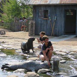 Un phoque et une otarie au parc animalier Le PAL