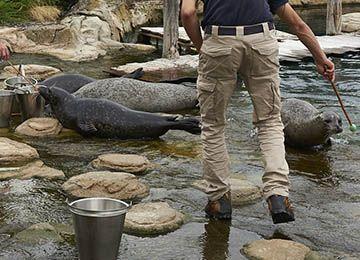 Des phoques au parc animalier Le PAL