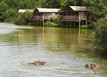 Vue des hippopotames dans le lac africain du parc Le PAL