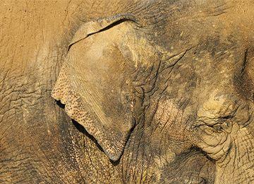 Gros plan sur un éléphant au parc animalier Le PAL