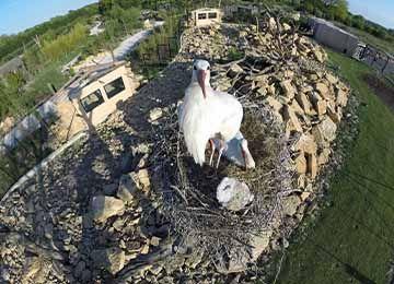 Nid d'une cigogne blanche au parc animalier Le Pal dans l'Allier