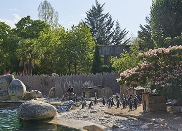 Des Manchots au parc animalier Le PAL