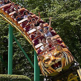 Le tigre de Sibérie au parc de loisirs Le PAL en Auvergne-Rhône-Alpes
